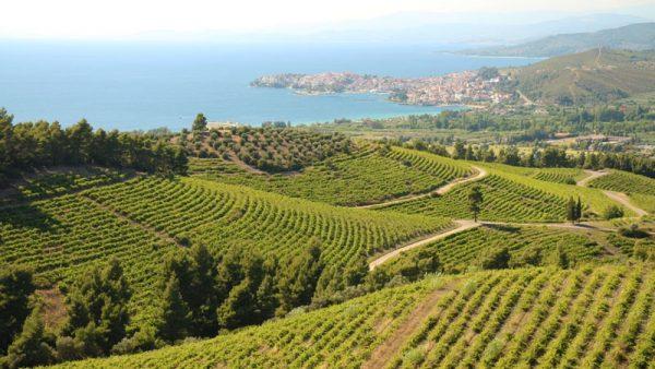 Bike Tour through Porto Carras Vineyards